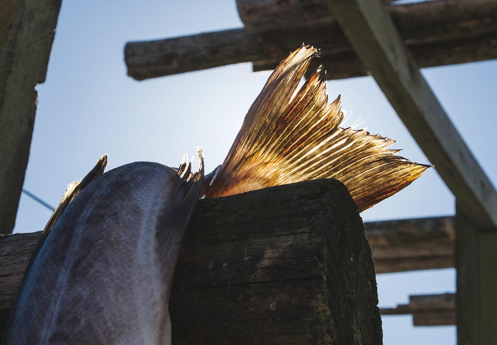 Cod tail in sun