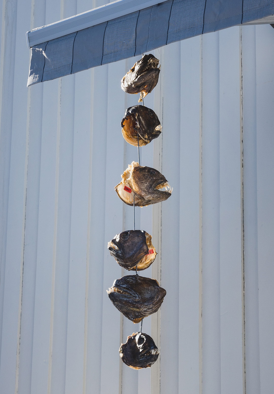 Cod heads on string