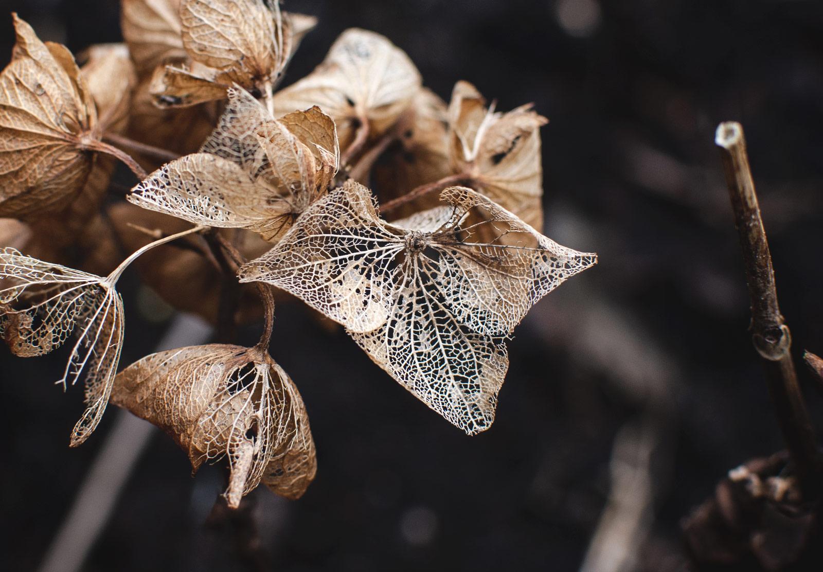 Closeup of decaying petals