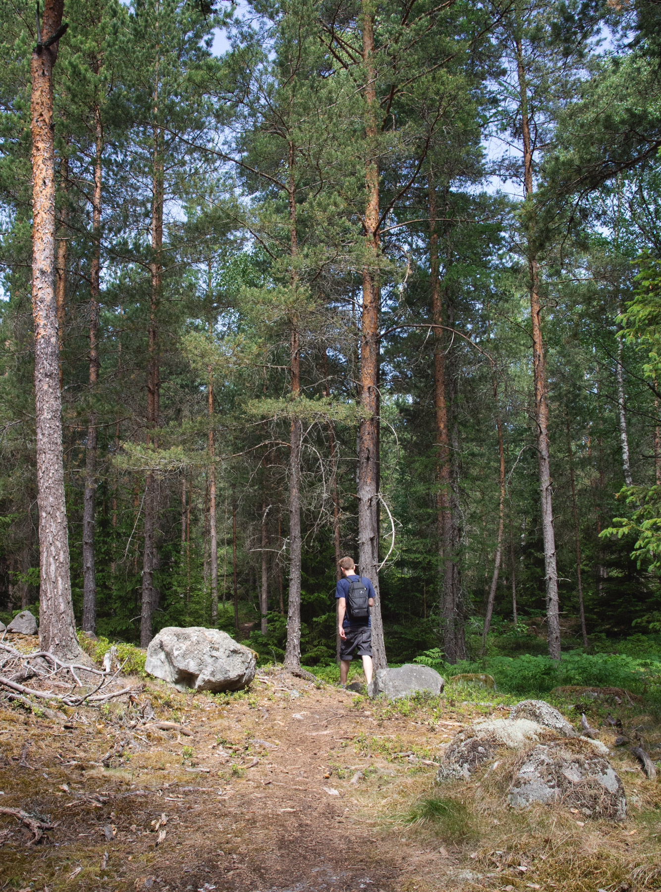 Man walking in tall trees