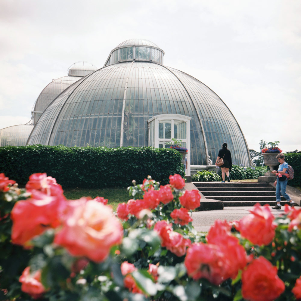Glasshouse and pink flowers