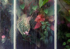 Leaves pressed against steamy window