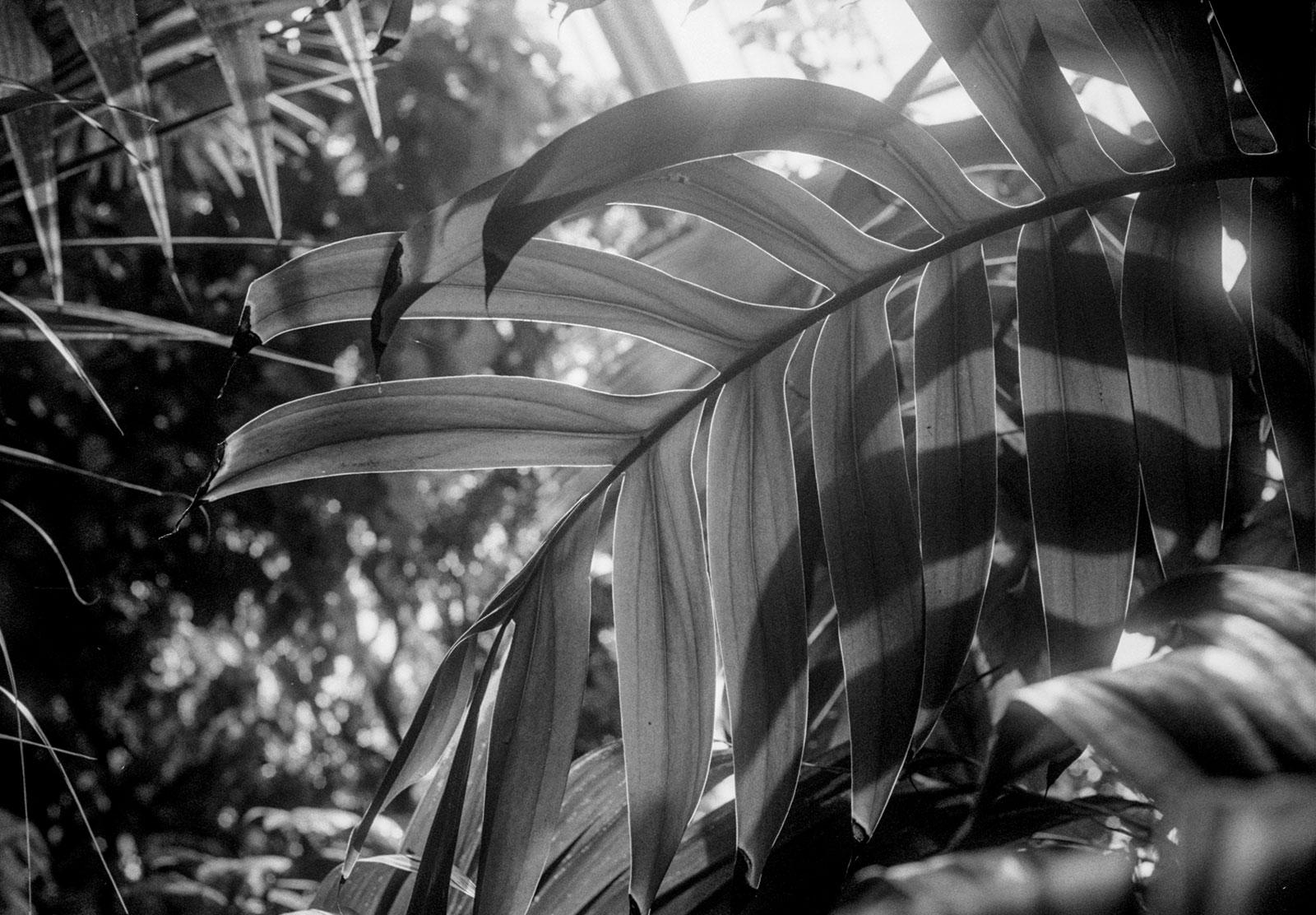 Sun shining through leaf