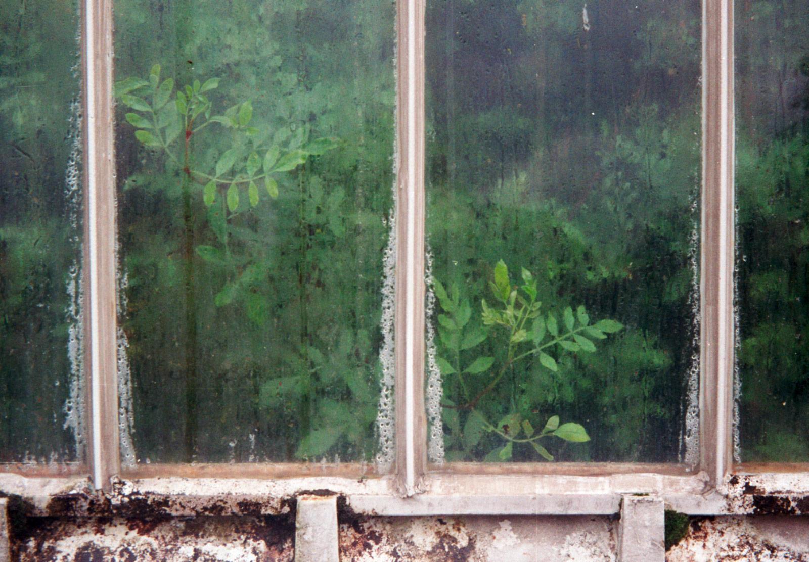 Leaves on steamy window