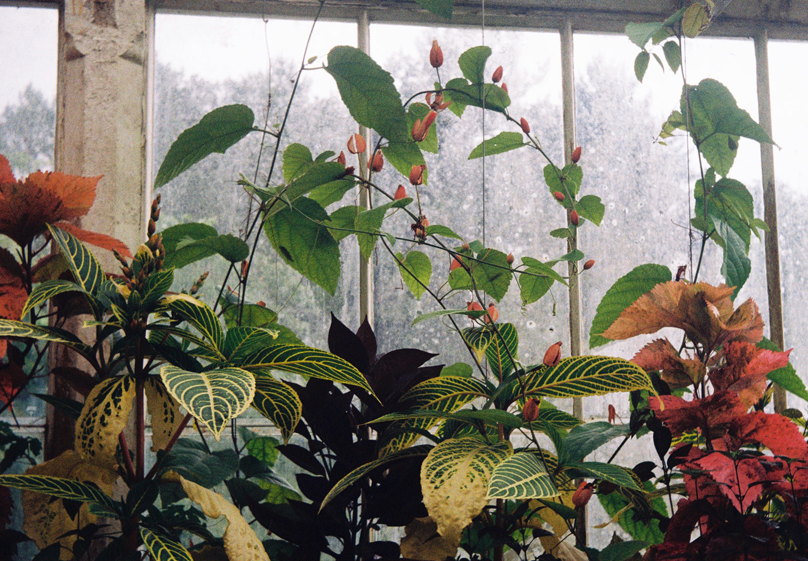Climbing plants on window