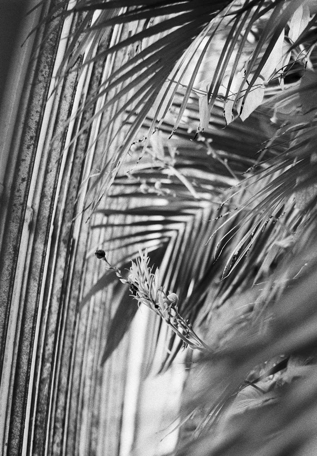 Layers of palm leaves