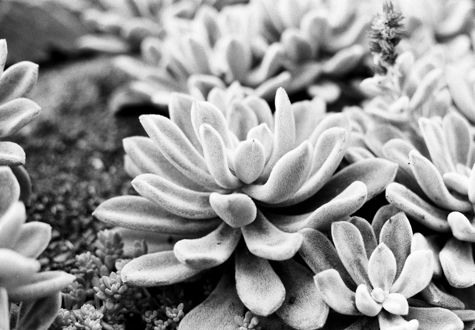 Closeup of succulents