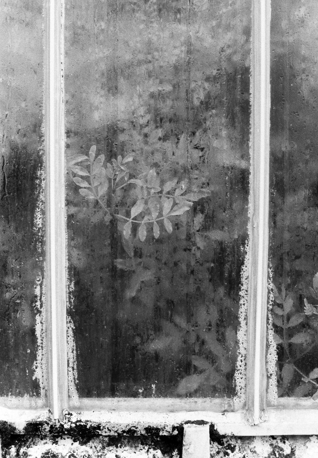 Leaves against steamy window