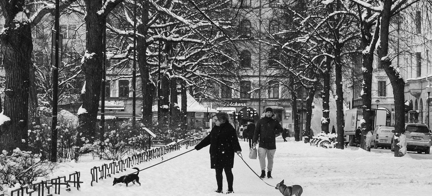 Woman walking dogs in the snow