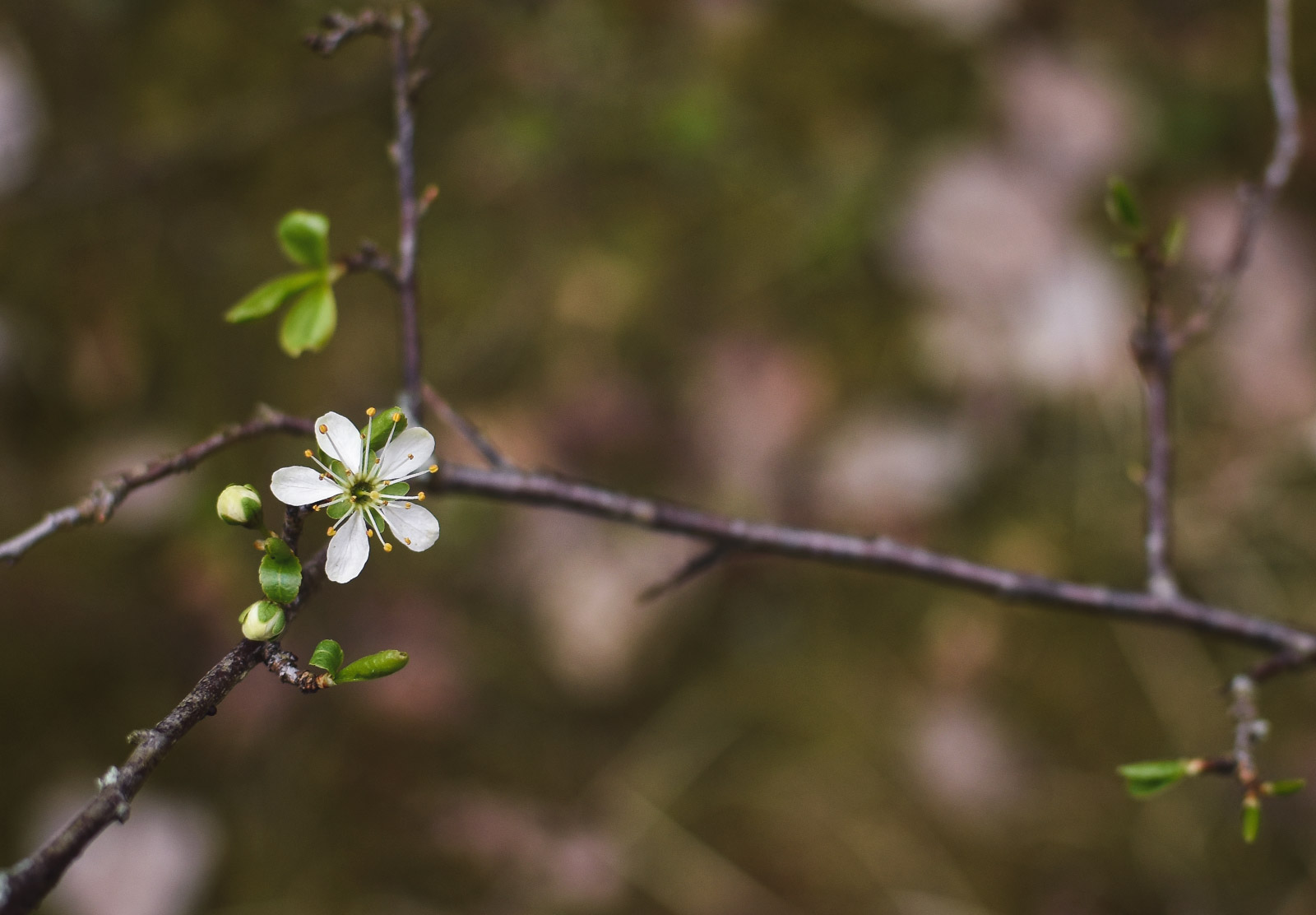 Single flower on branch