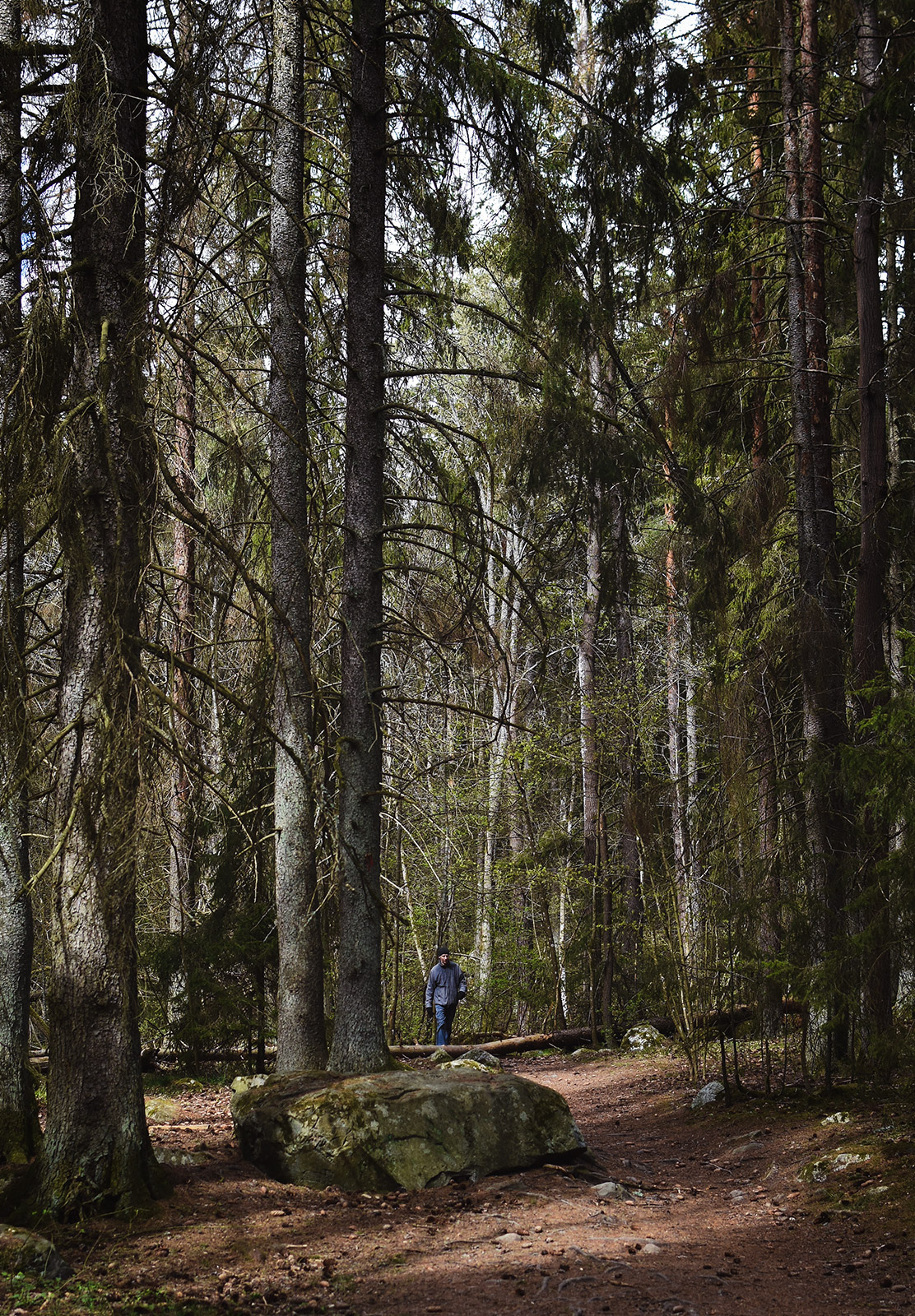 Man in tall trees
