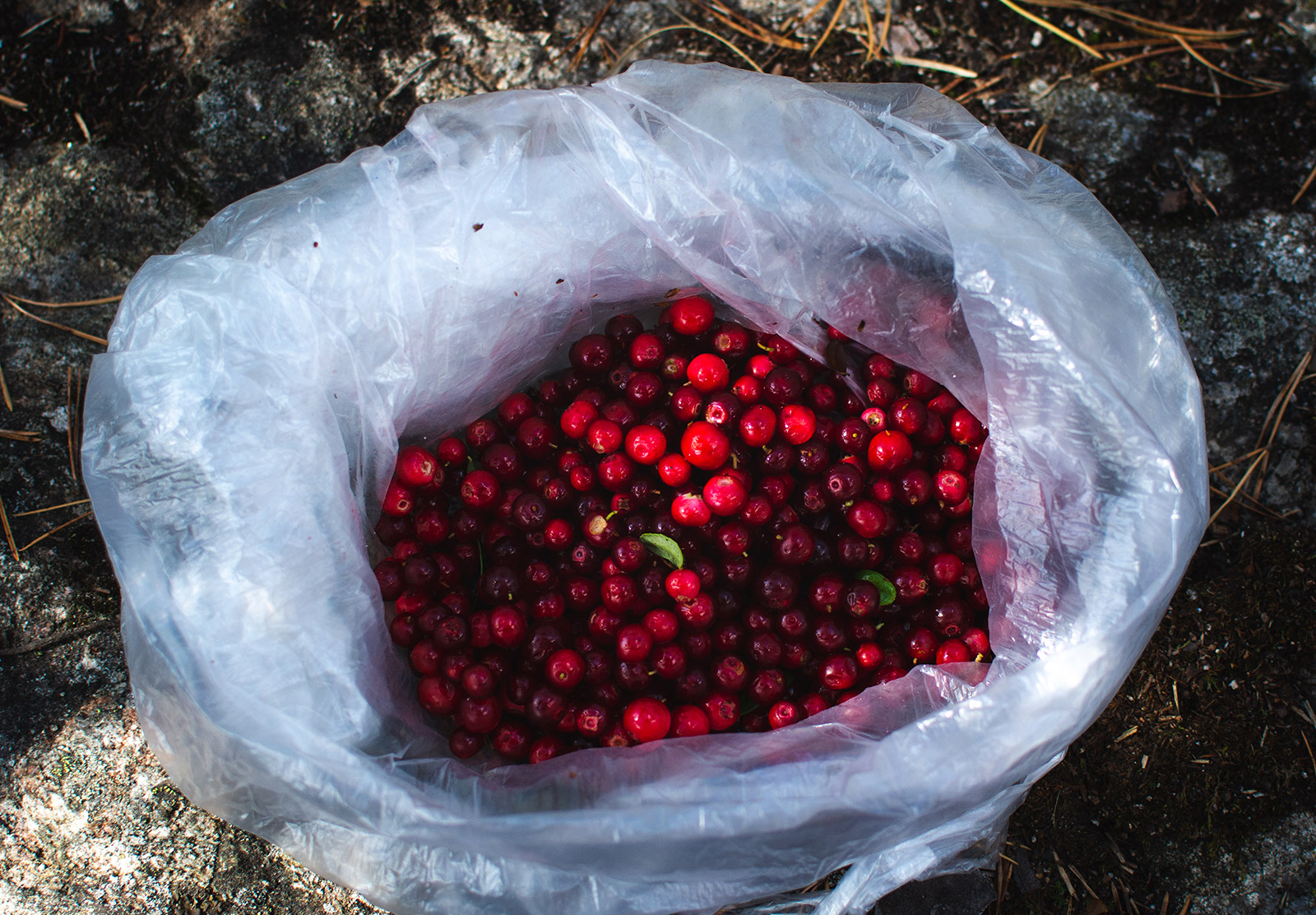 Red berries in bag