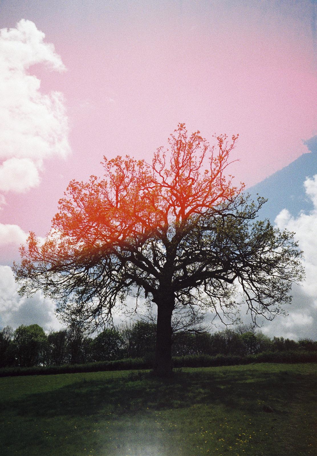 Leafless tree on hill