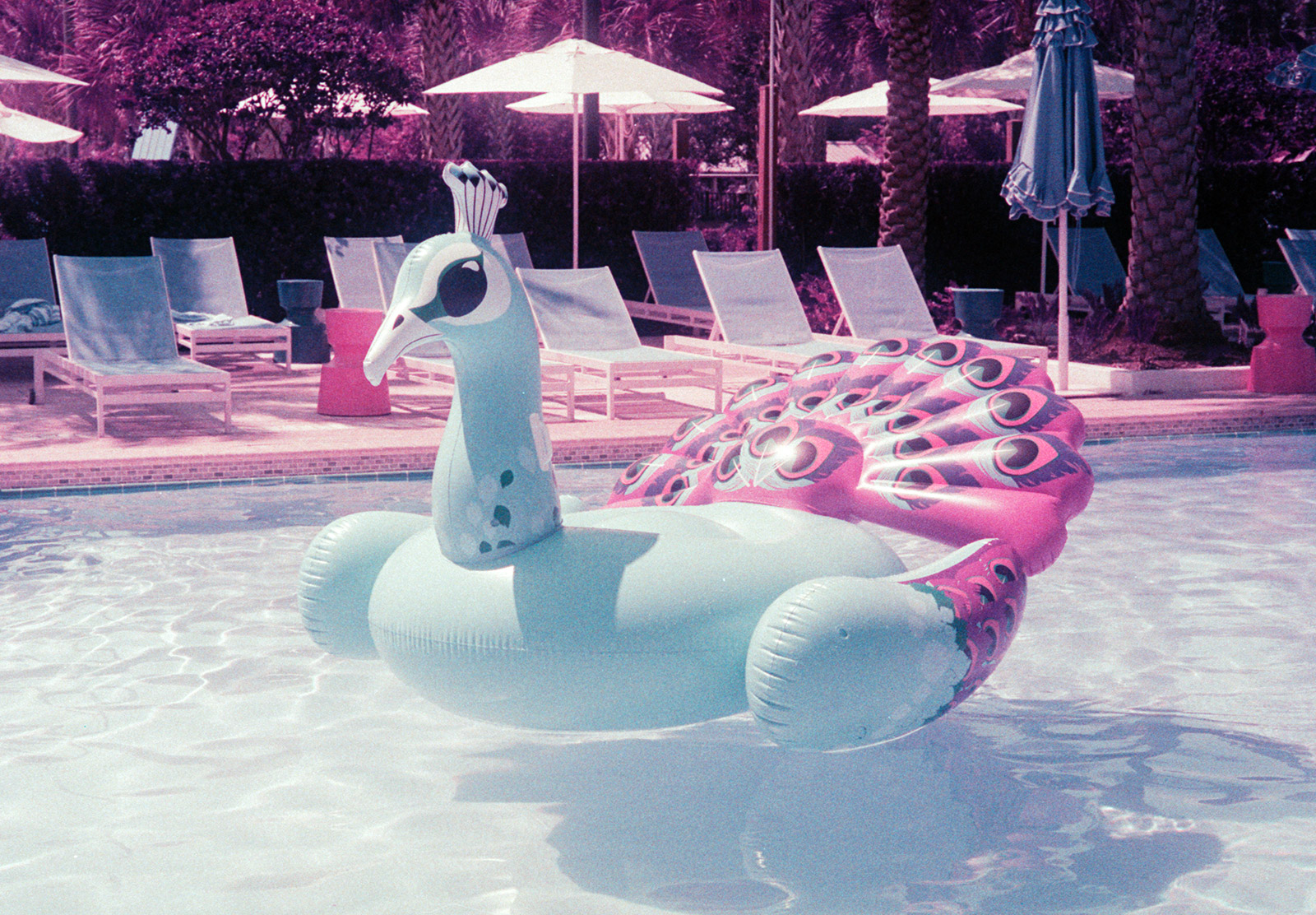 Inflatable peacock in pool