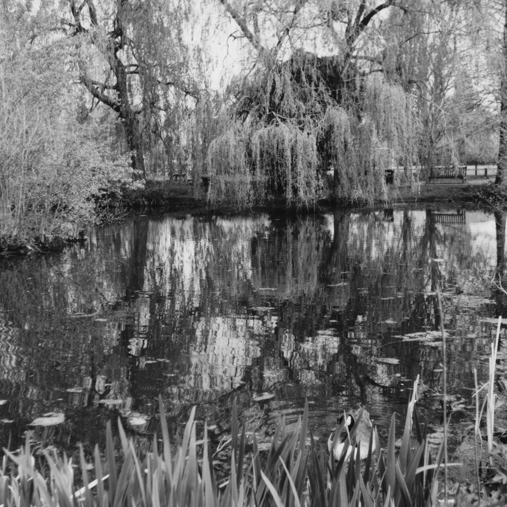 Reflections on pond