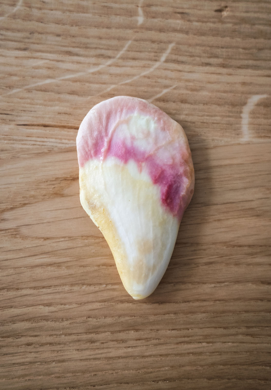 Pink mango seed