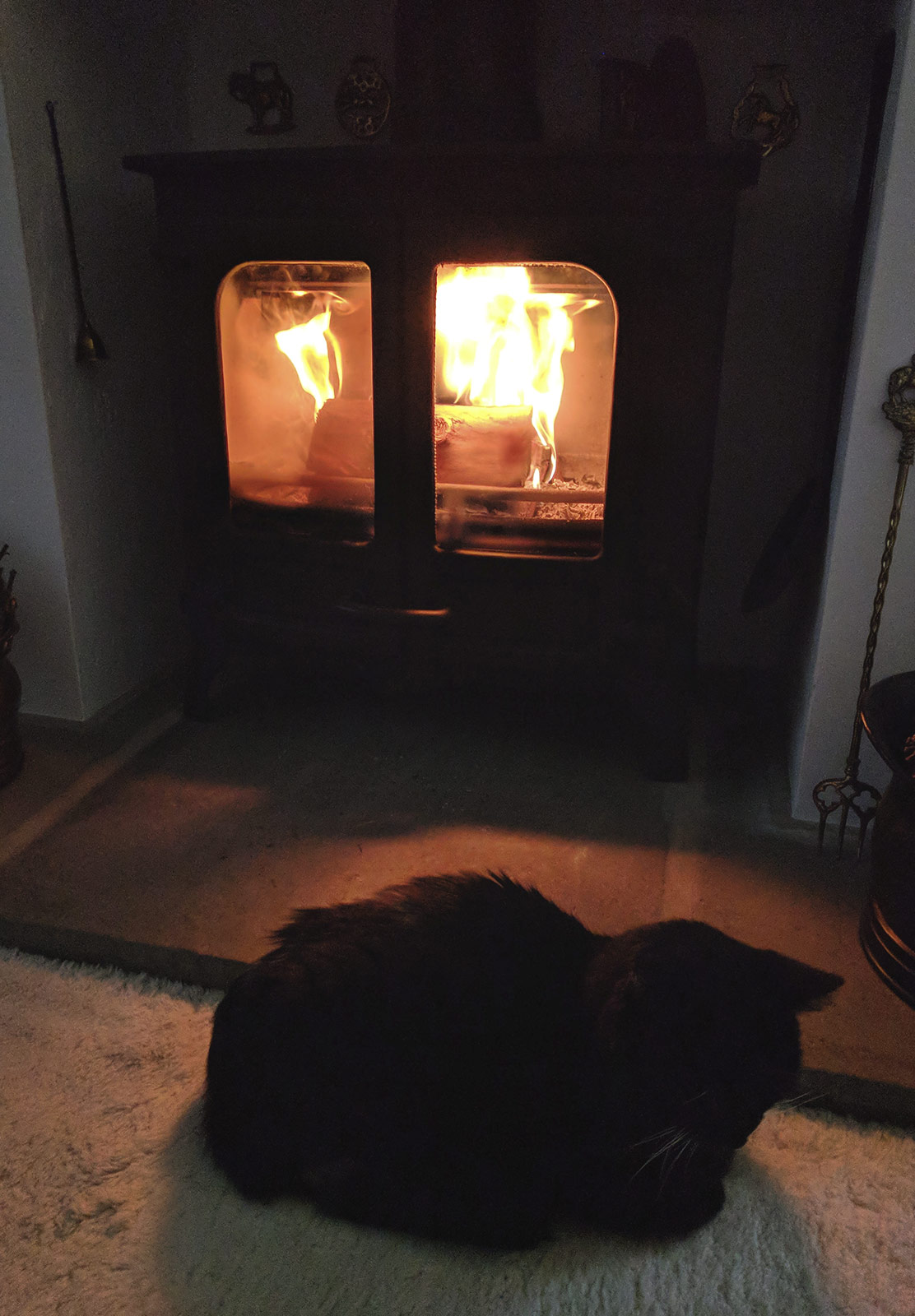 Cat sitting by the fire