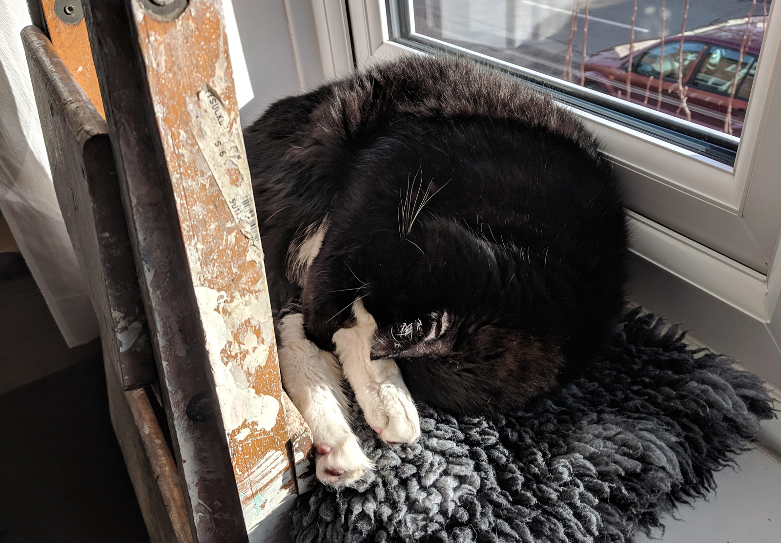 Cat sleeping on windowsill