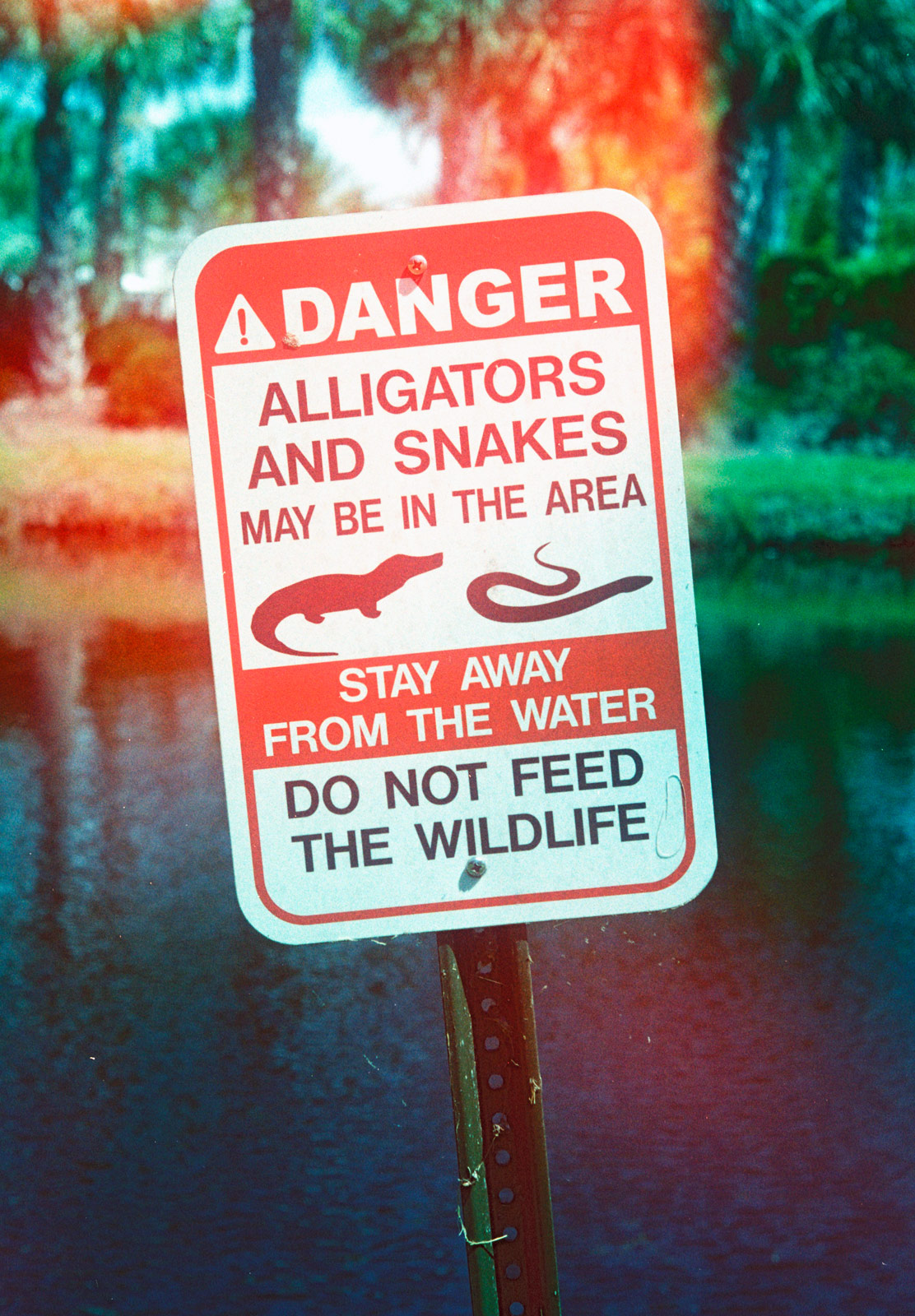 Aligator warning sign