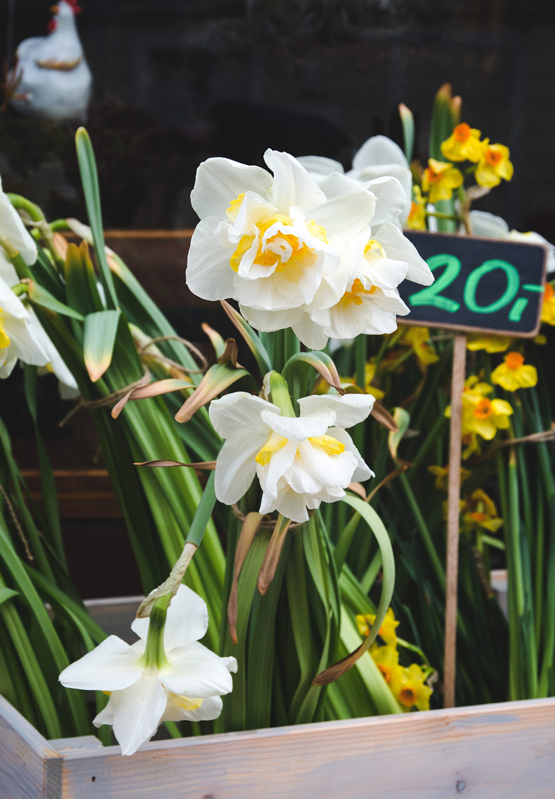 Bunched daffodils