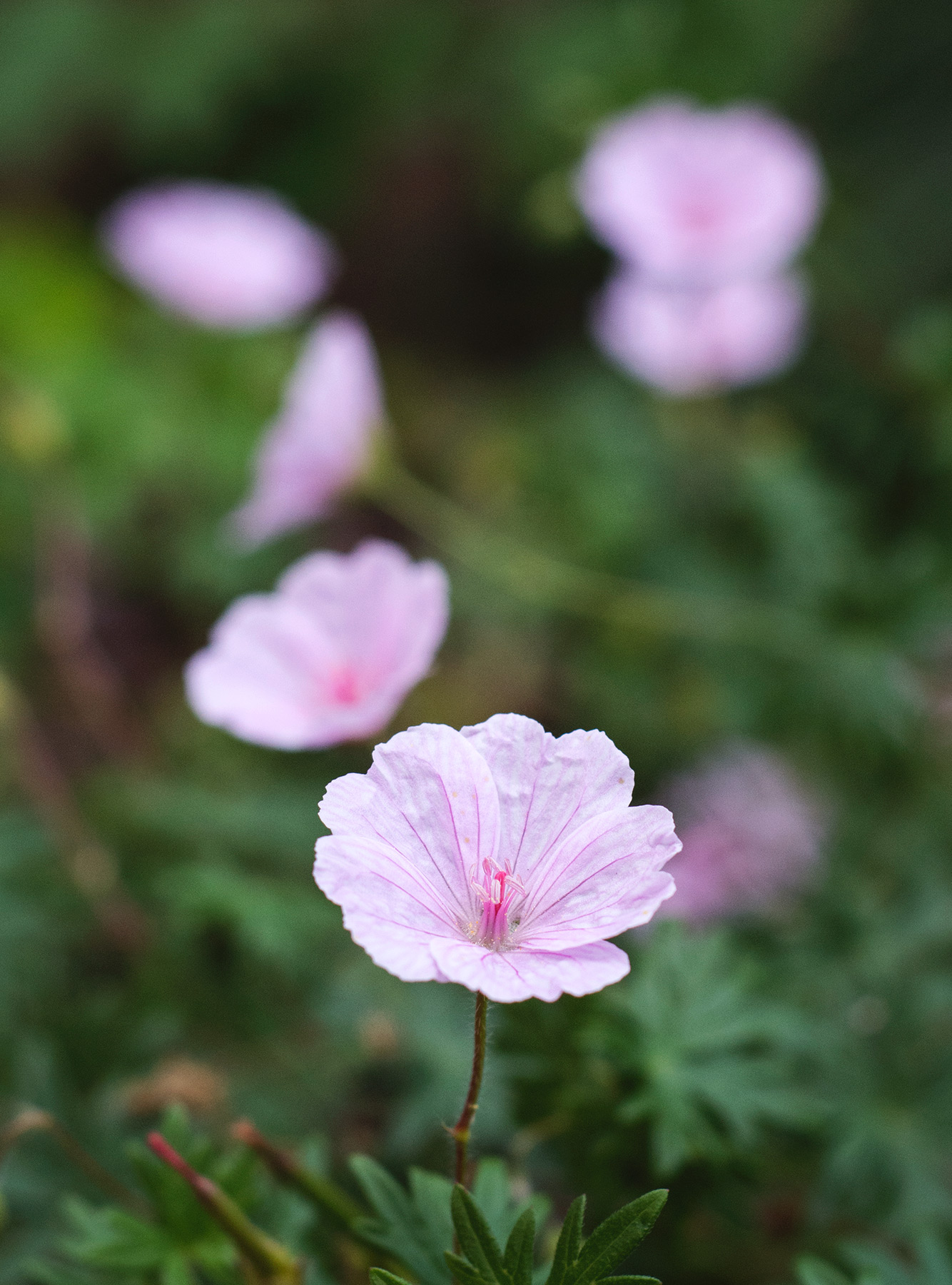 Small pink flower