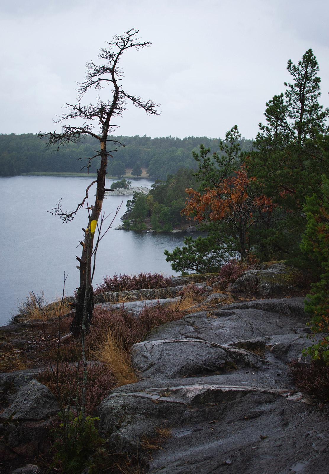 Rain and lake