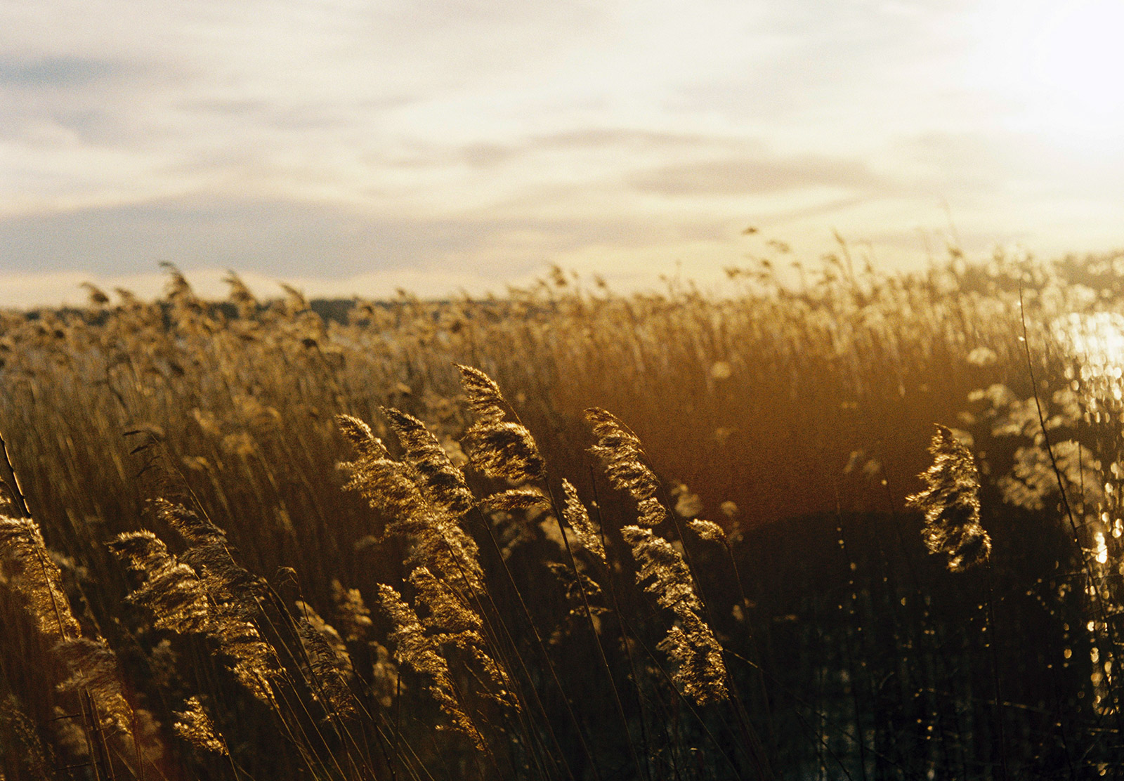 Orange light on grasses