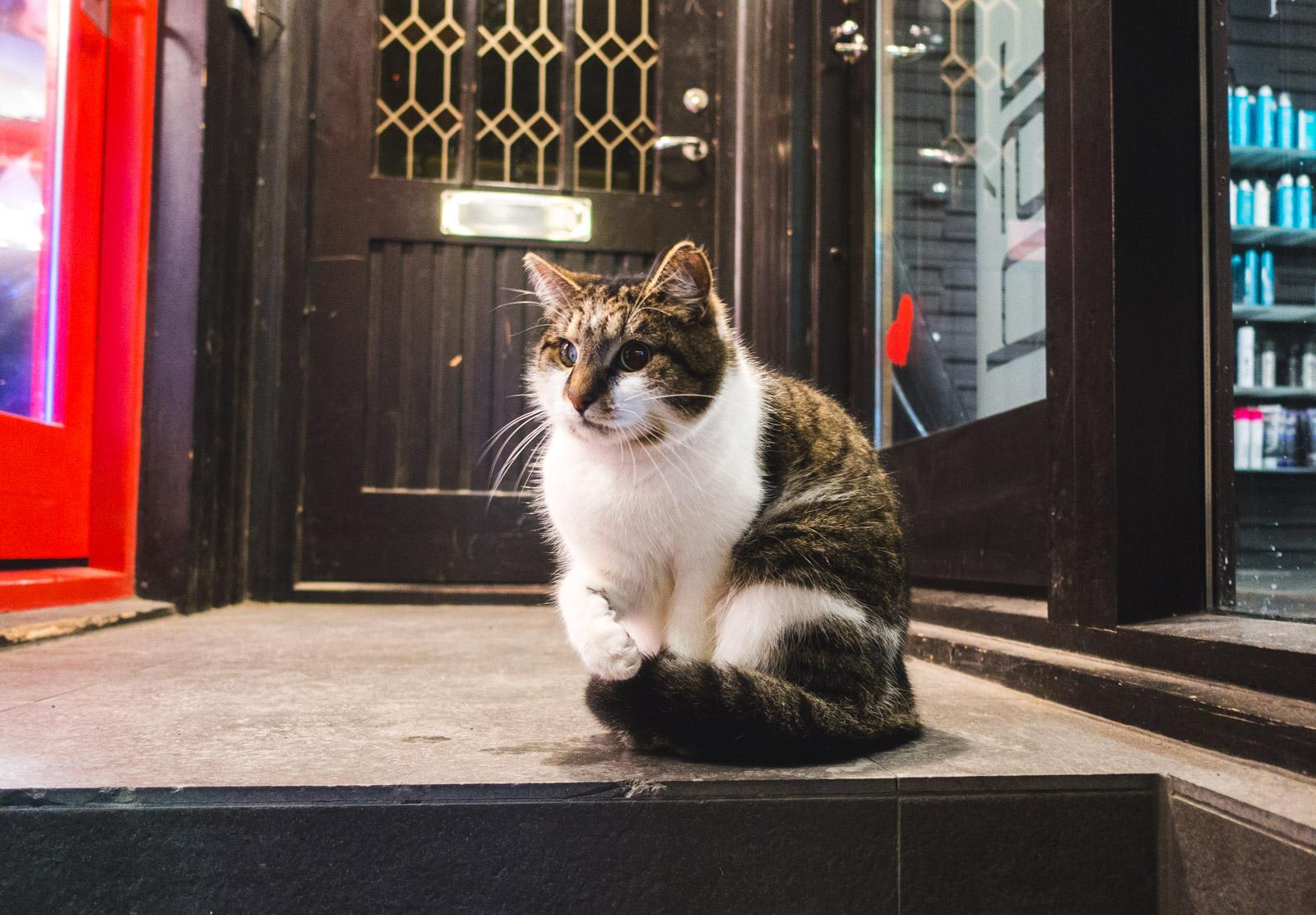Cat on doorstep