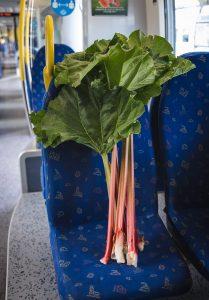 Rhubarb on train seat