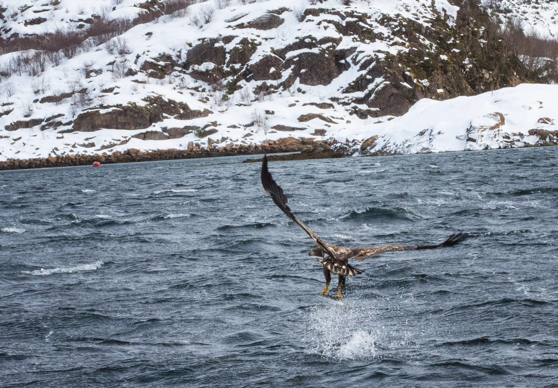 Eagle swooping over water