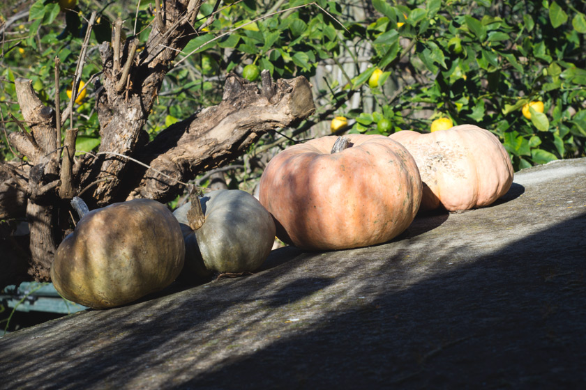 Squash on a sunny roof