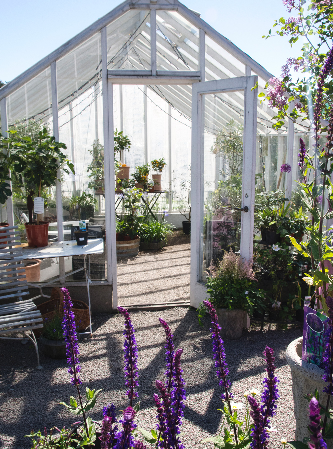View into greenhouse