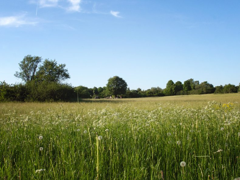 Grene field and blue sky