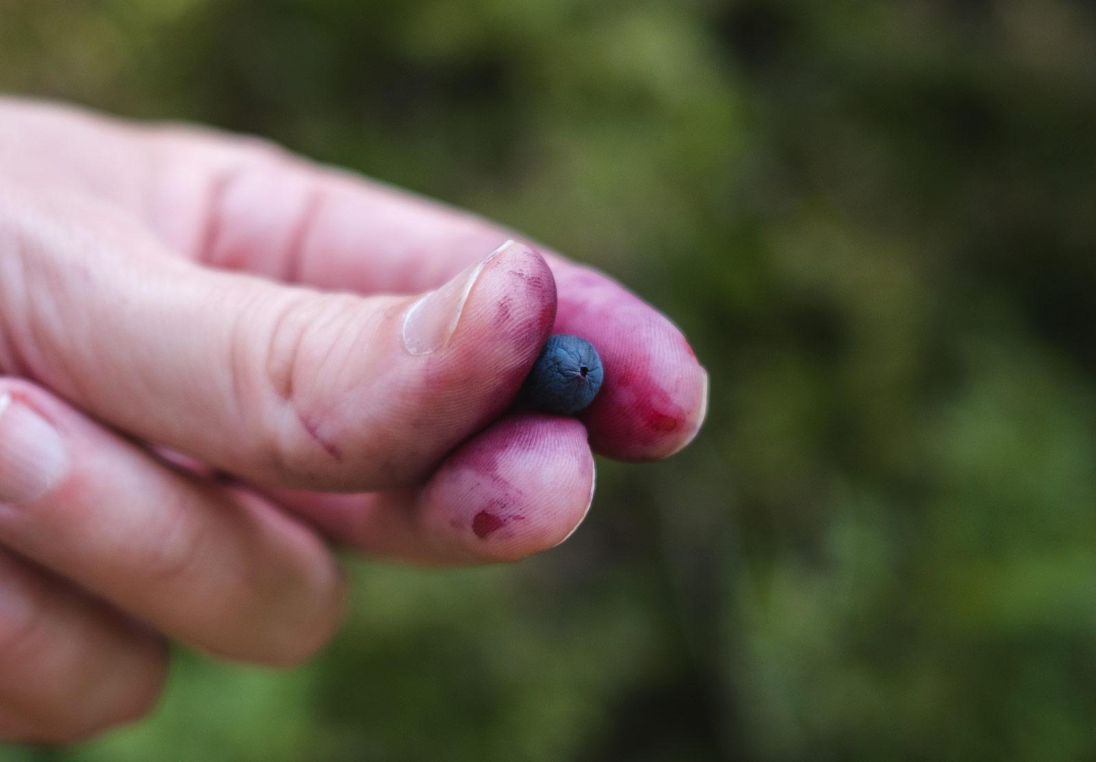 Shrivelled blueberry