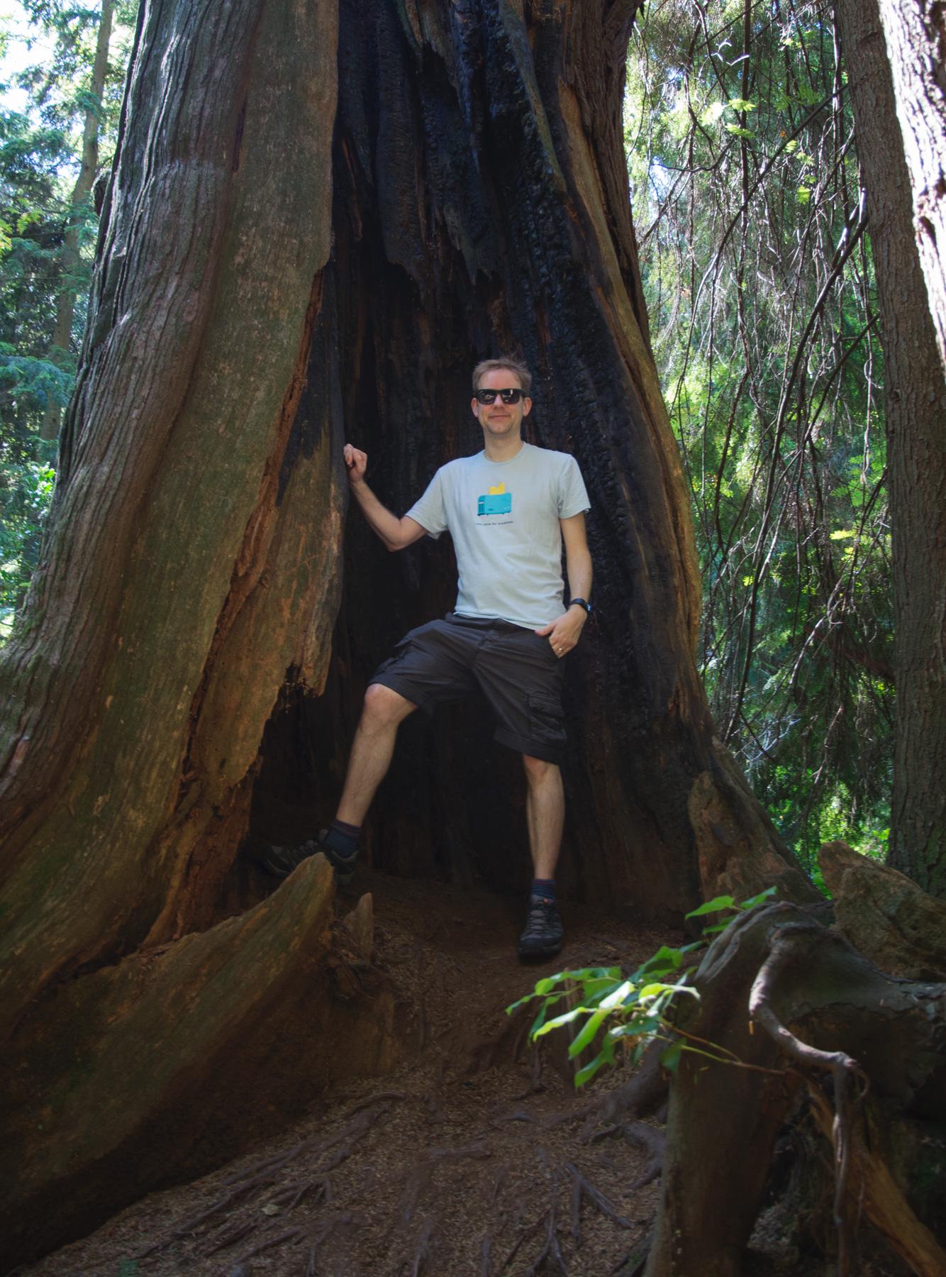 Man standing in burnt cedar tree