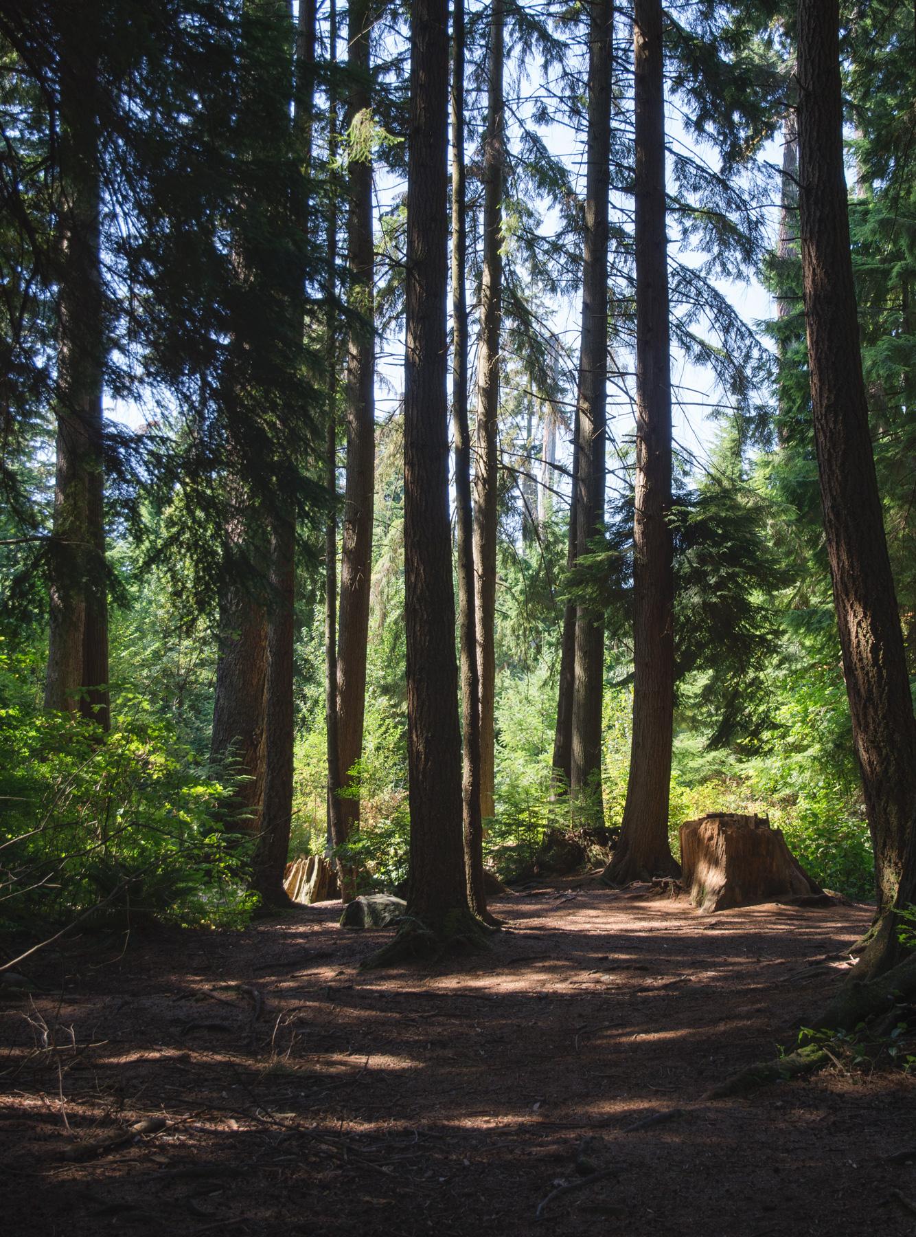 Sunlight in dark forest