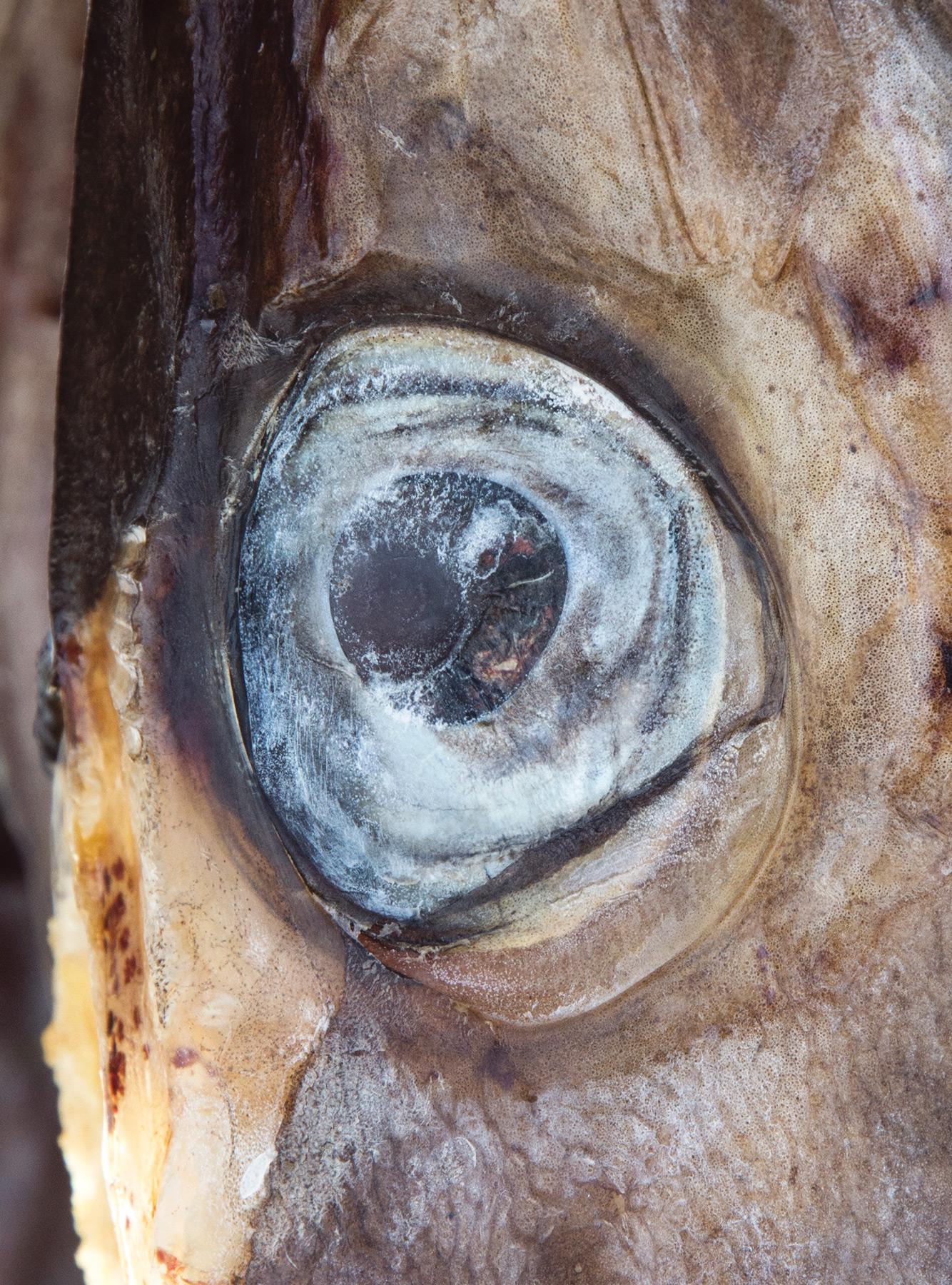 Closeup of fish eye