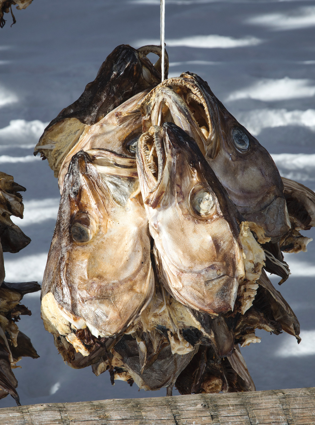 Fish heads on string