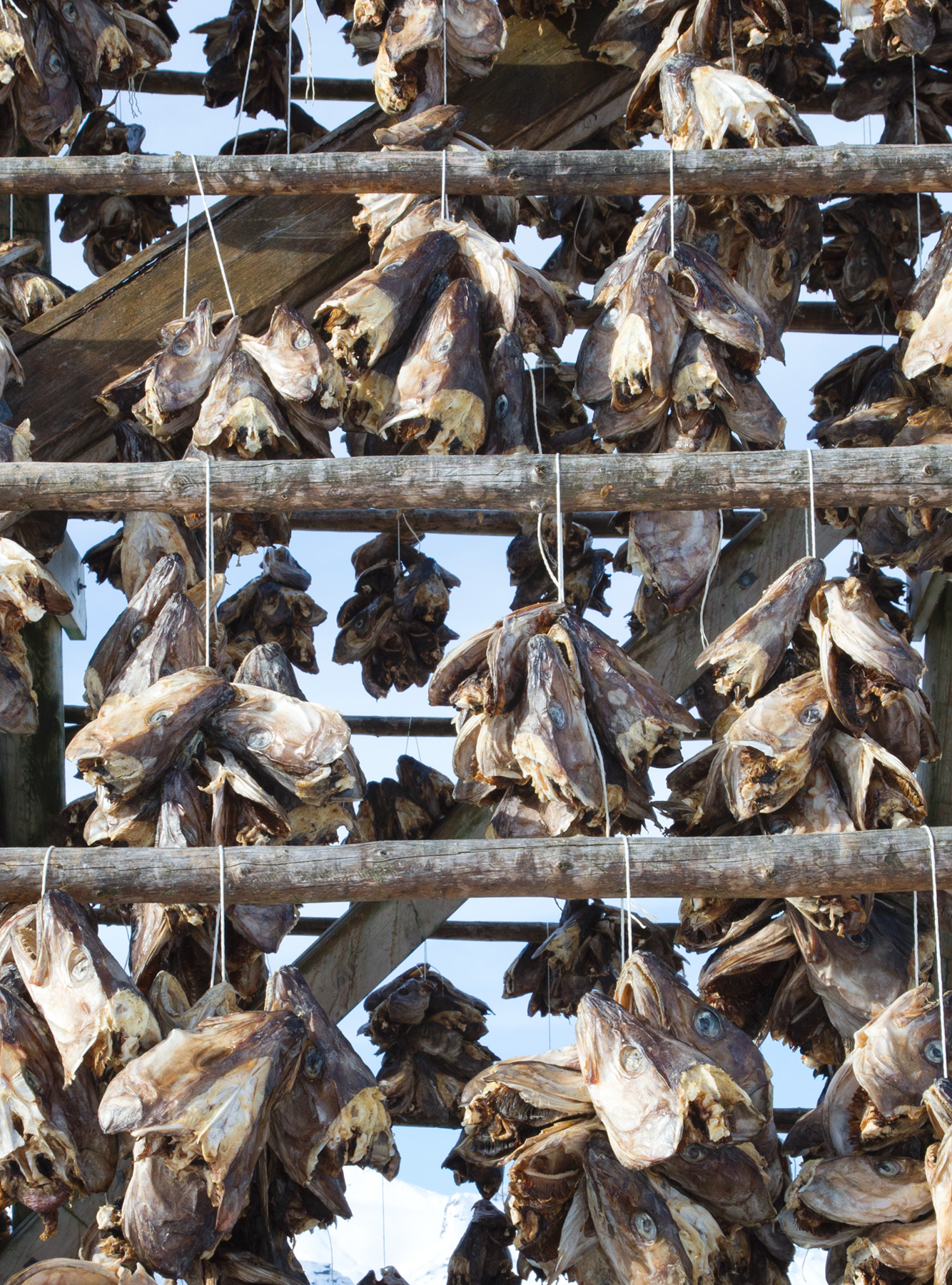 Fish heads on wooden frame
