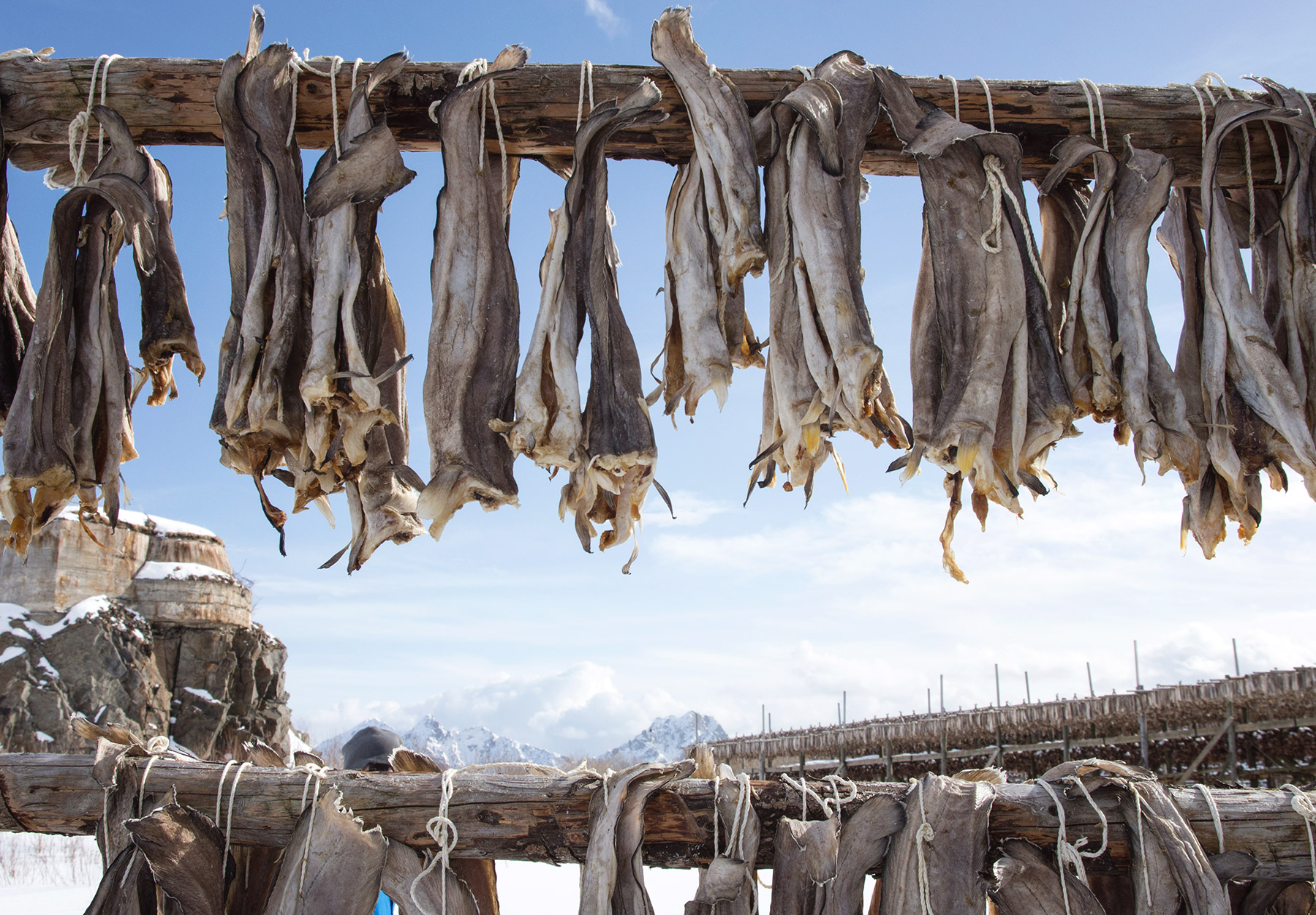 Cod tied to wooden frame