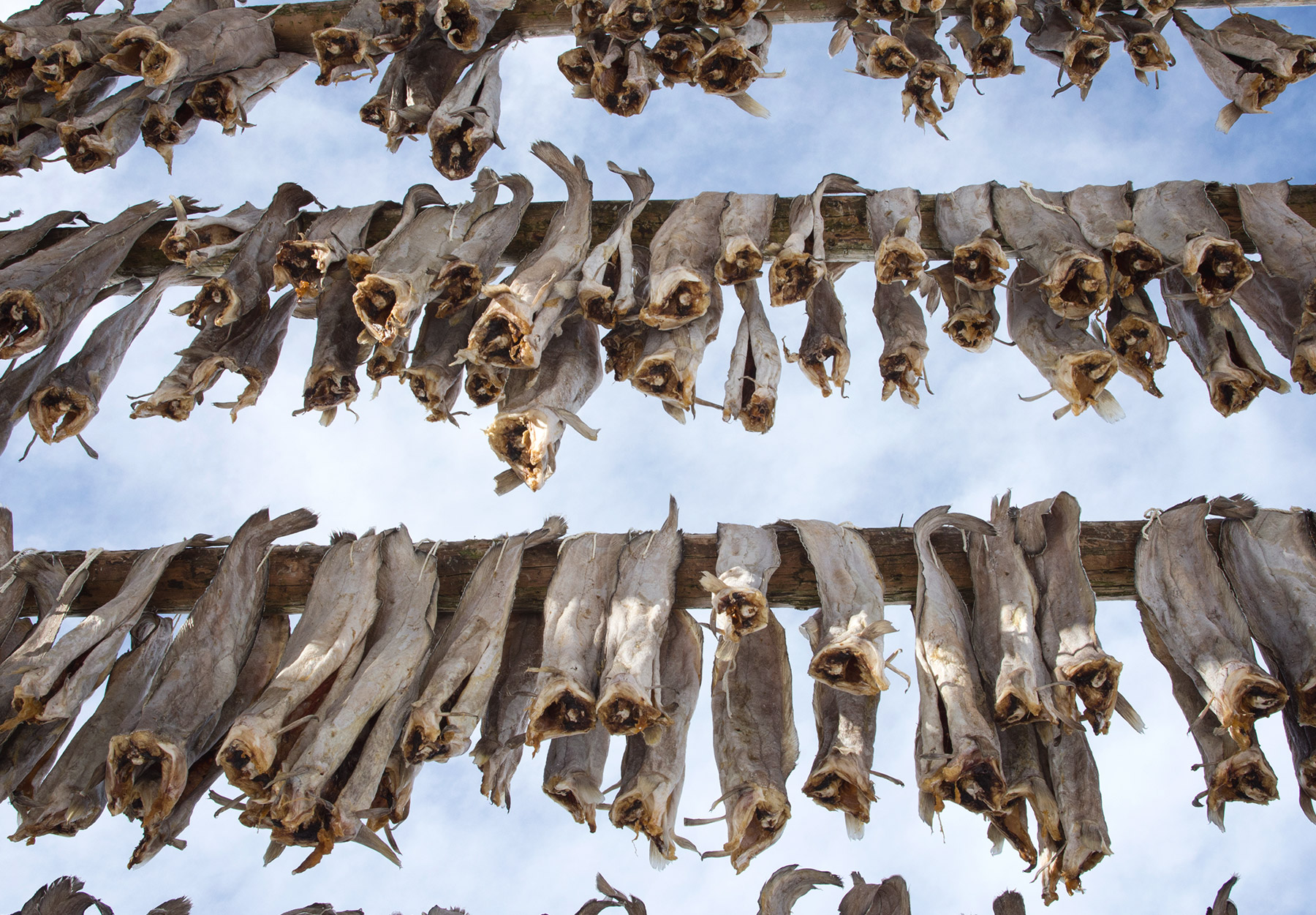 Looking up at hanging cod