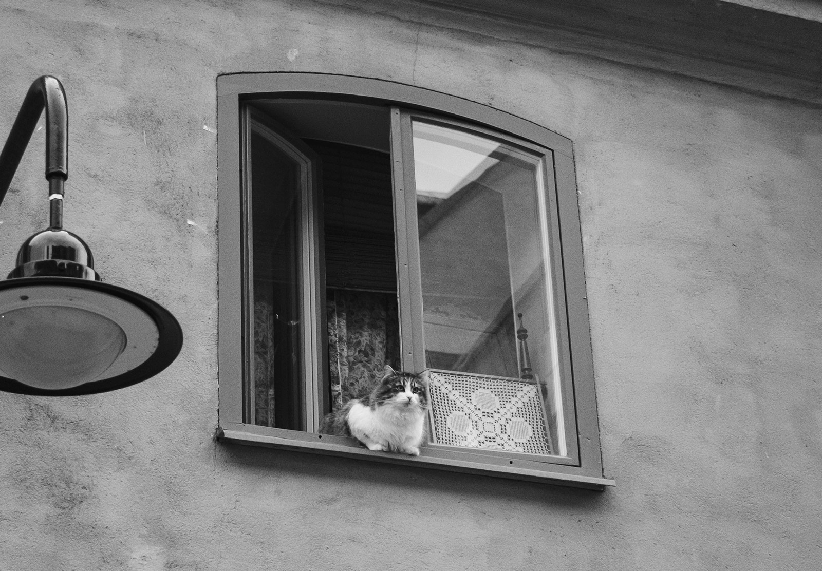 Cat hanging out of window