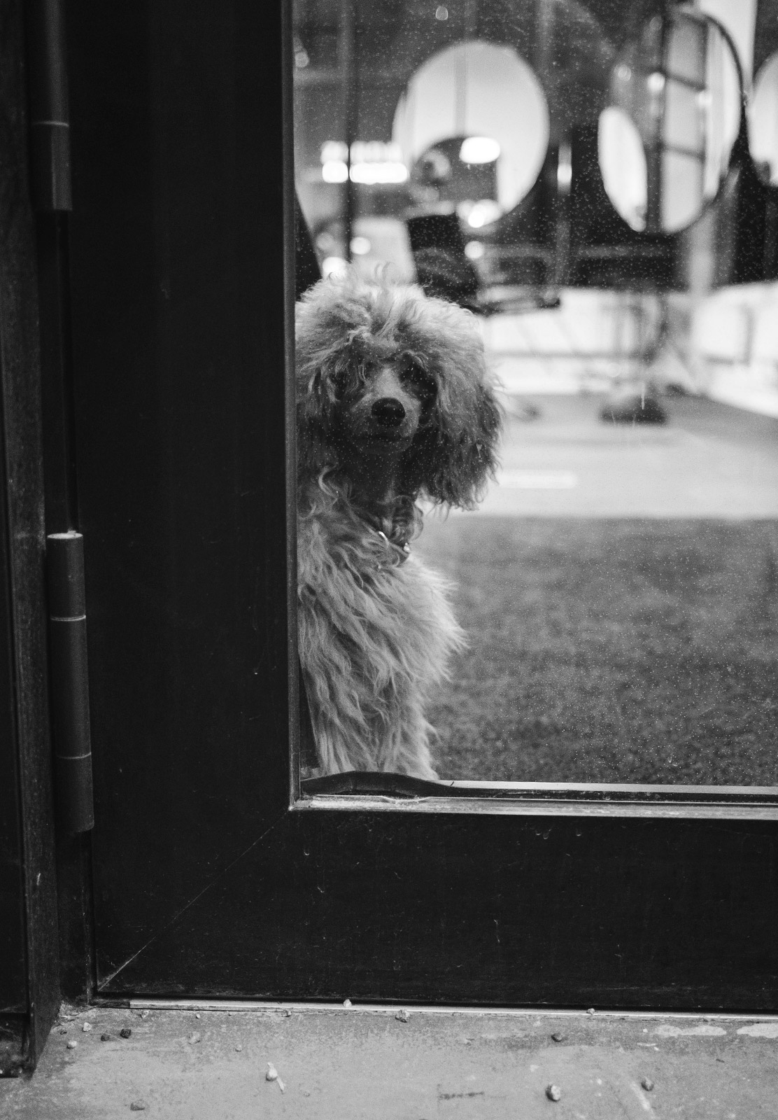 Dog looking out of door