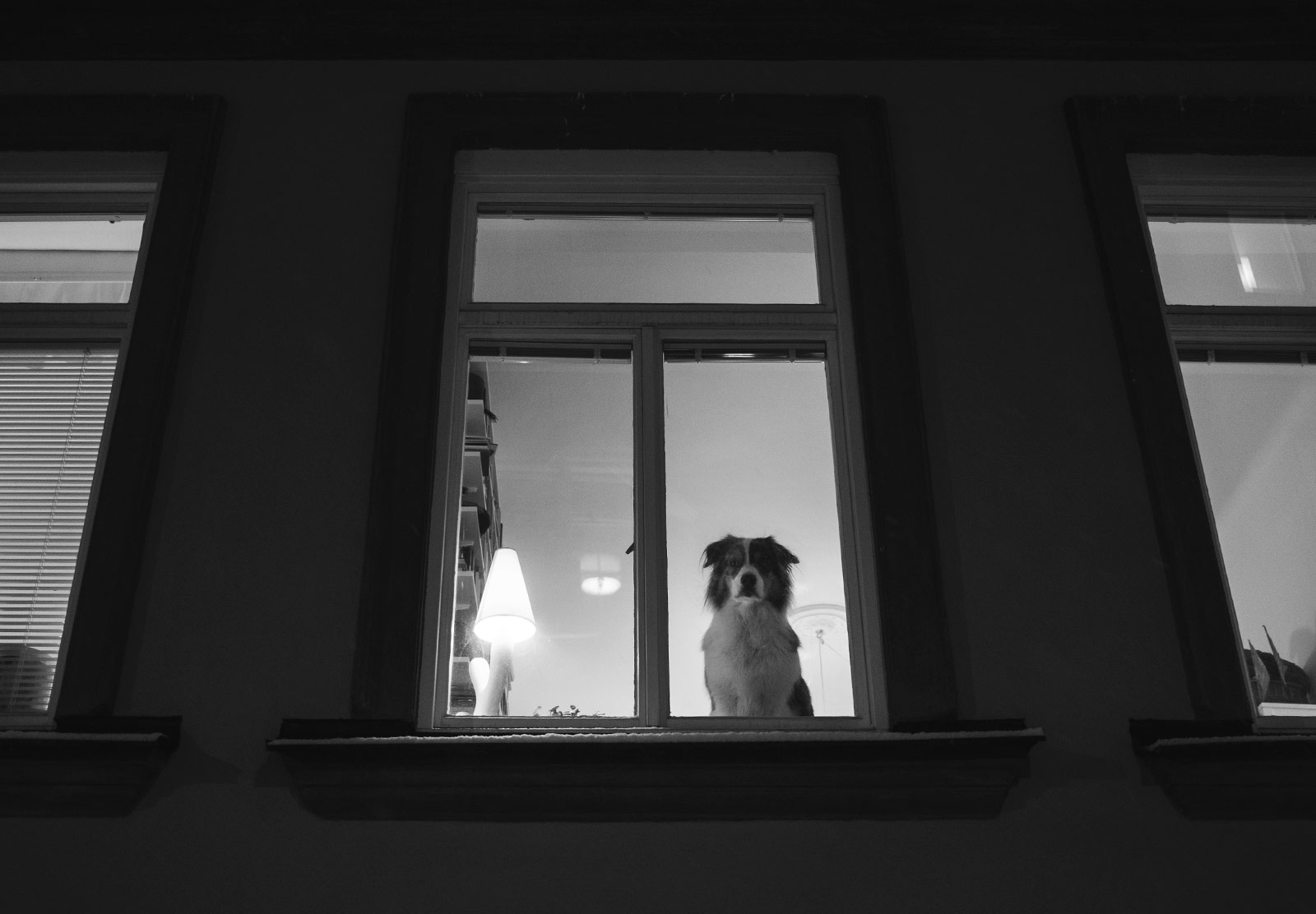 Dog looking out of window