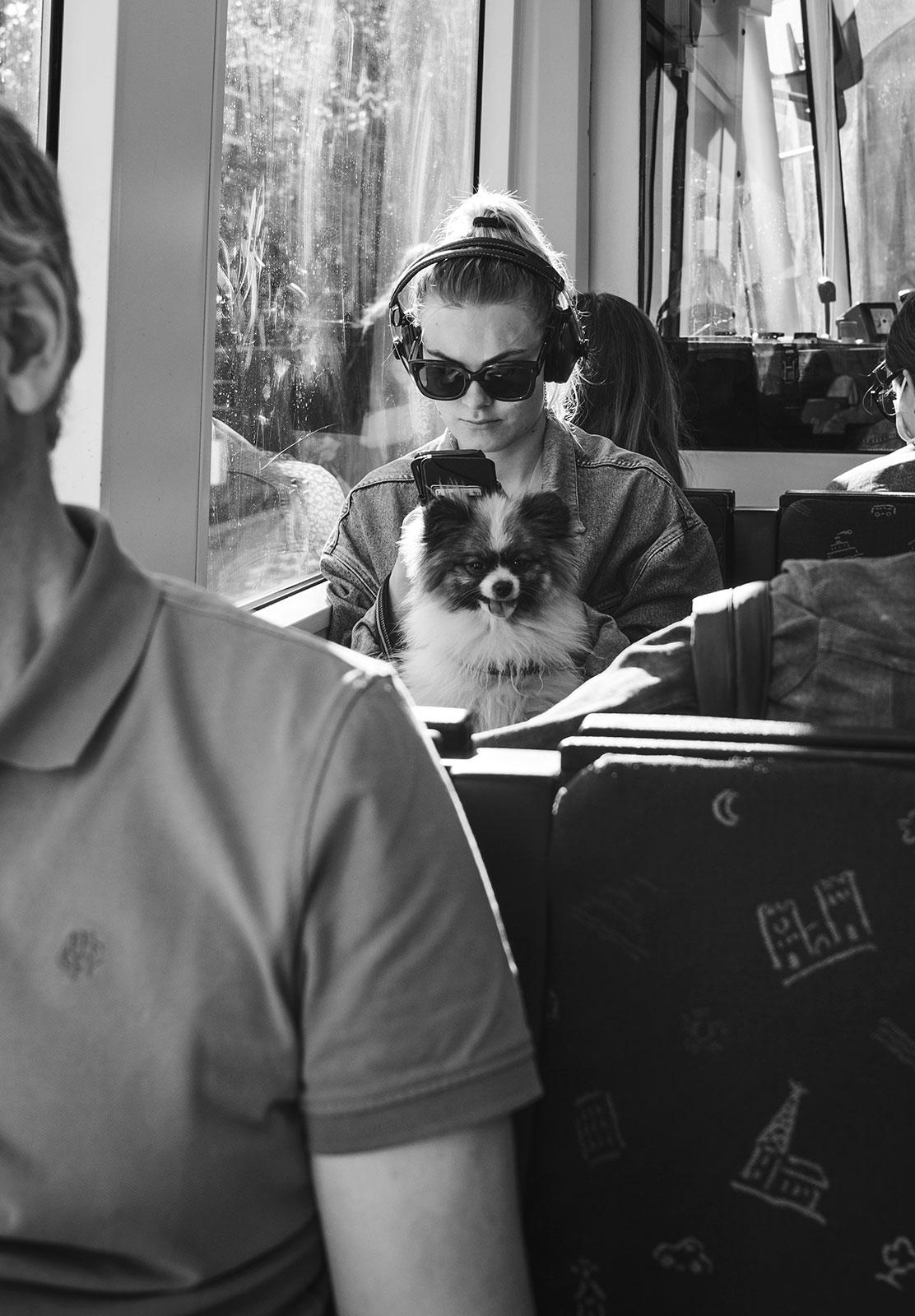 Dog sat on a train