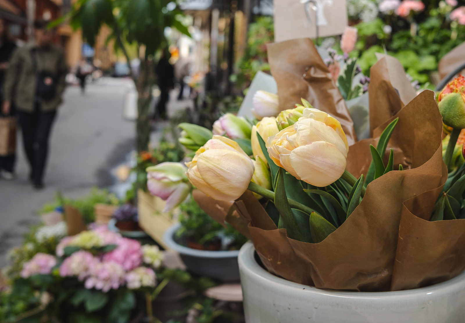 Tulips wrapped in paper
