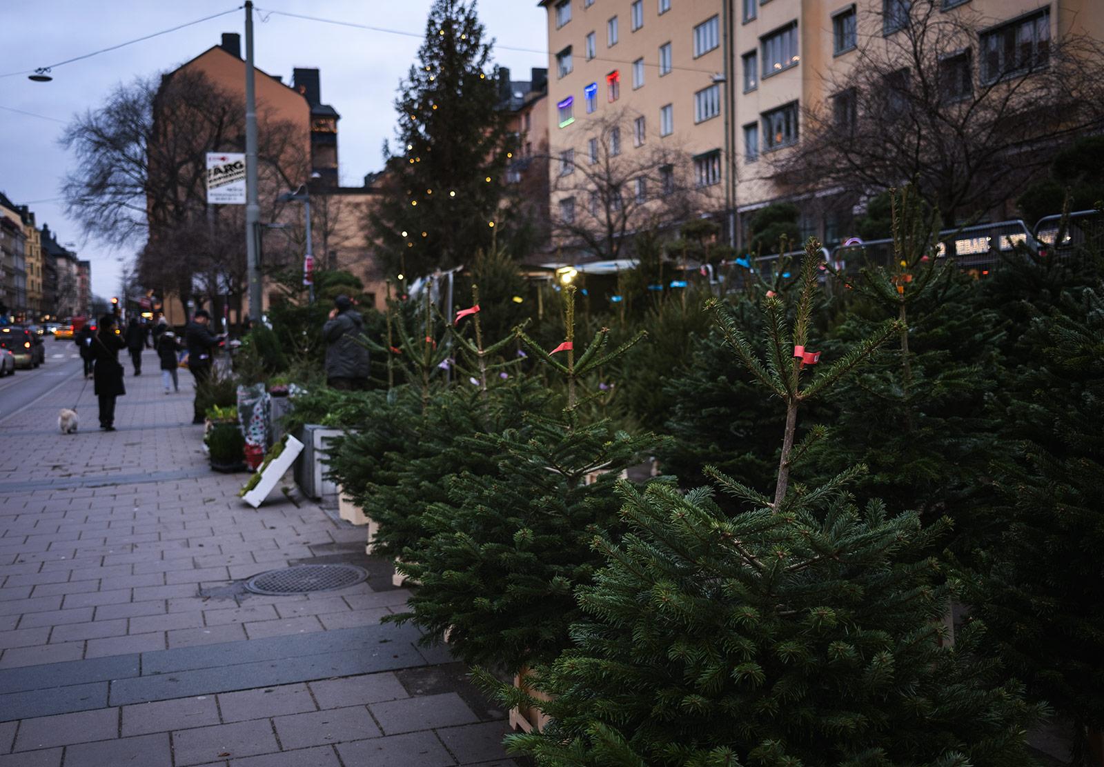 Line of Christmas trees on street