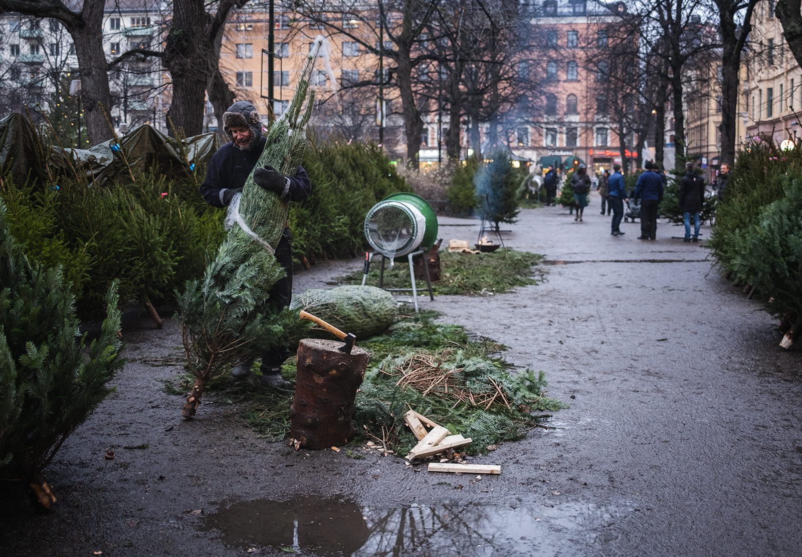 Man unwrapping Christmas tree
