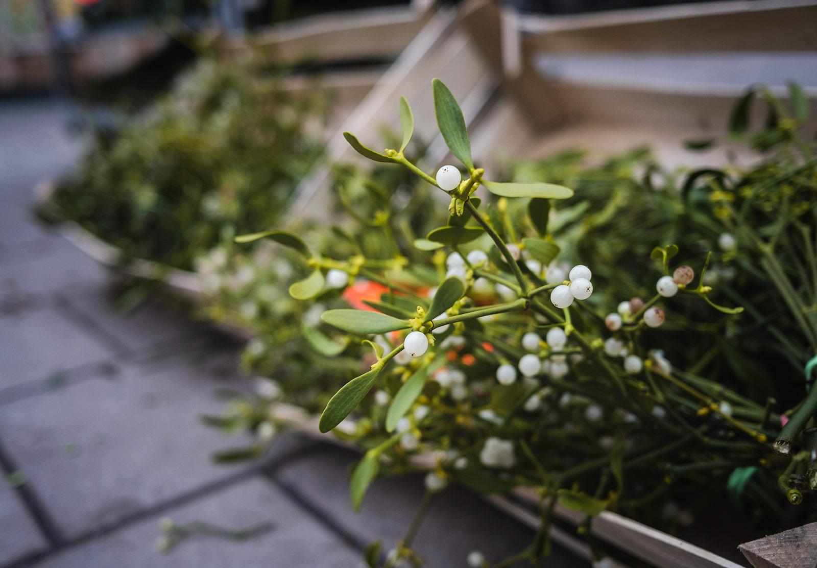 Box of mistletoe