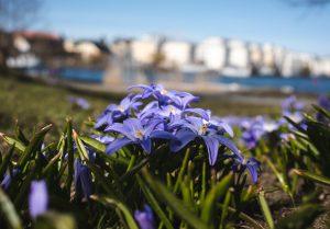 Purple flowers in grass